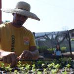Moradores de Niterói podem pedir doação de mudas produzidas nos viveiros da cidade