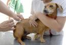 Vacinação contra a raiva animal continua em dois postos de Niterói